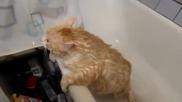 Дебело коте отказва помощ след баня ,но само не може да излезе от ваната