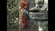 Песни на Кос c Приятели - Вlackbird song