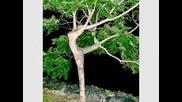 Аномалия - Растения Наподобяващи Полови Органи