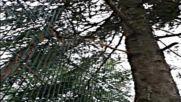 озеленяване разчистване рязане растения върху ограда