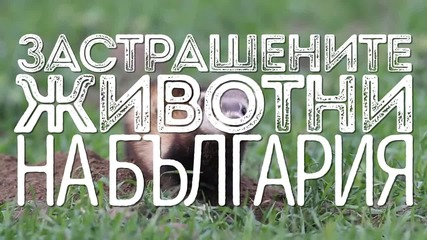 Изчезващите животни на България