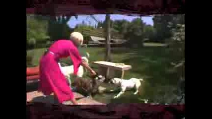 Pink And Her Dogs
