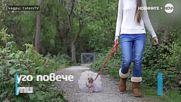Лили - кучето с гардероб за 10 000 паунда