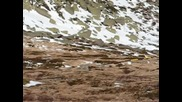 Мечка Под Вр. Резньовете На Витоша ( biggeorge Video Edit ) + [субтитри]