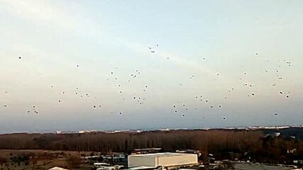Ято от хиляди гарги в небето над София