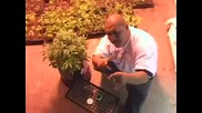 Los Marijuanos and Fcm Click Let s Smoke video