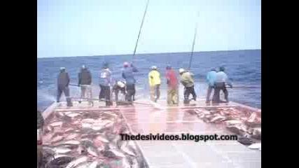 Много Бързо Ловене На Риба