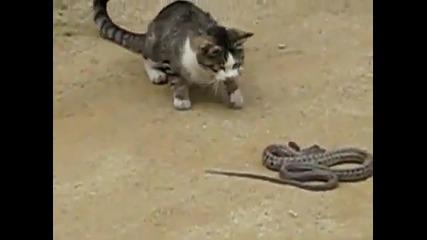 Котка претрепва змия