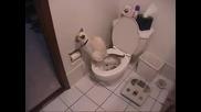 Котка използва тоалетната и тоалетна хартия