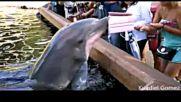 Делфин краде скъп таблет (ВИДЕО)