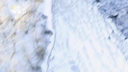 Белоглавият орел