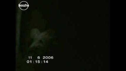 Странно Същество (извънземно) В Гората - Качи Видео и Mp3, Гледай Видеоклипове