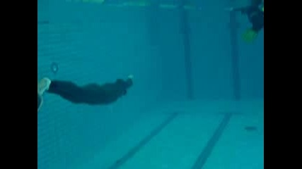 Плуване Под Вода Без Кислород