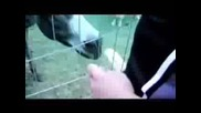 Jeff Hardy В Зоогическата Градина