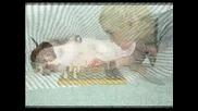 Животни - Бебета