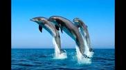 Интересни факти за делфините.