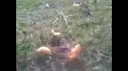 Скакалец яде Best Ini