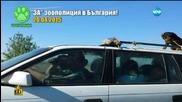 За зоополиция в България - Господари на Ефира (30.04.2015)