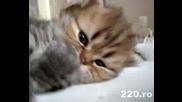 Най - Сладкото Коте На Света...