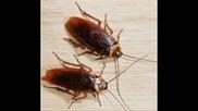 Хлебарките - най - големият враг на хората