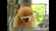 Щура Маймуна Си Търси Белята От Тигър:)