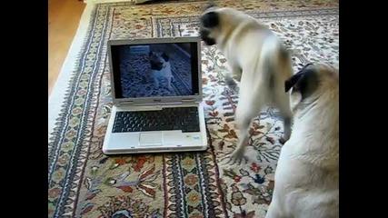 Кученца се гледат на видео (мн сладко)