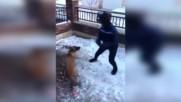 Идиот дразни куче