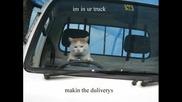 Компилация от снимки на котки