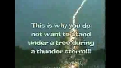 Светкавица Удря Дърво