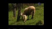 Сестри Диневи - Отишла Е Бяла Яна
