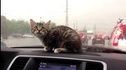 Коте срещу чистачки ..