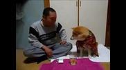 Куче на дава на стопанина си да пие!