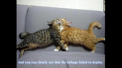 Смешни животни и хора - Видео и снимки - котки котка куче