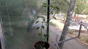 Каквото посадиш, това ще порасне 2 месеца и 2 седмици