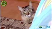 Котето на Чък Норис!