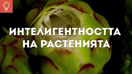 Интелигентността на растенията