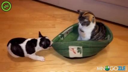 Догче се закача с котка