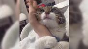 bugabuga привързана котка widen