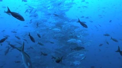 Във водите на Галапагоски острови! Изключителна красота!!!