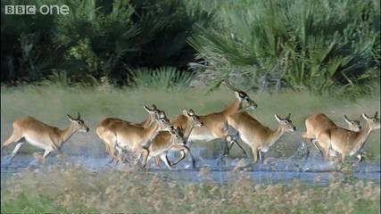 Животът на антилопата