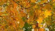 Шансон Красивые Песни! Ах, Осень! Прощай, Прощай!
