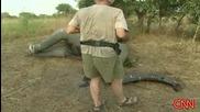 Масово Избиване На Слонове заради бивните