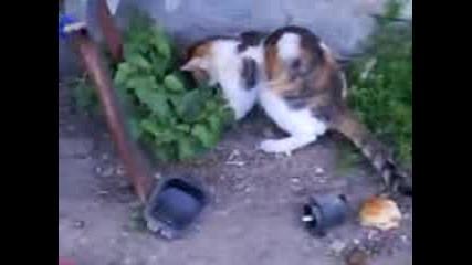 котка и гущер