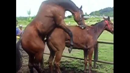 Смях - Неудържим порив между коне ( H Q )