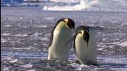 Пингвински неволи