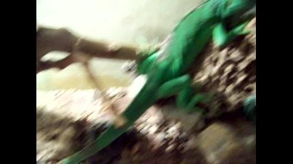 iguanata mi igi