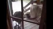 Котка vs мечка