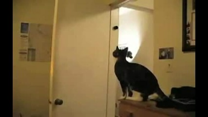 Котка алпинист невероятно
