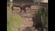 В сянката на динозаврите - Част 1/6 ( Бг Аудио)