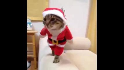 Котката на Дядо Коледа